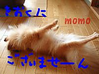 Momob_2