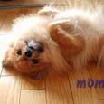 Momoc